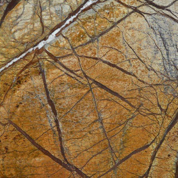 Rainforest Brown